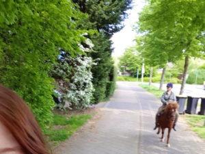 Selfie vom Pony
